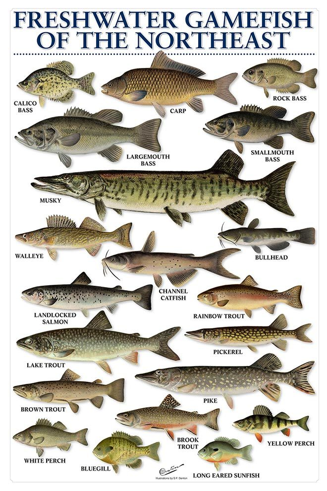 North American Freshwater Fish Species